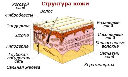 kozha-2