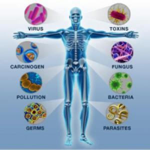 immunitet1