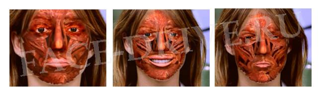 face-musculs