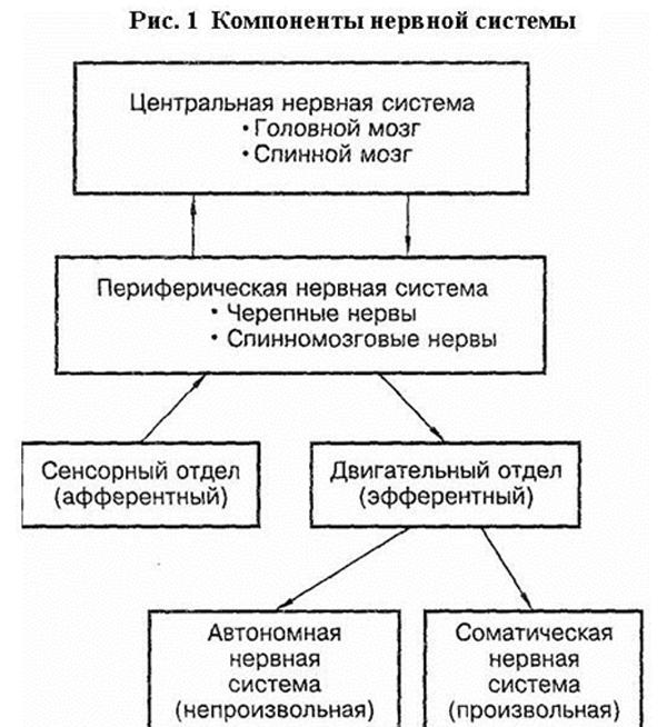fisio1